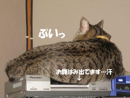 20070102215115.jpg