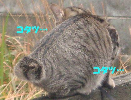 20070105224546.jpg