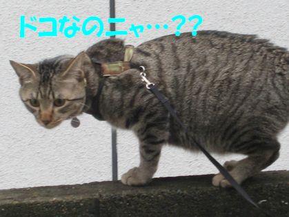 20070105224658.jpg