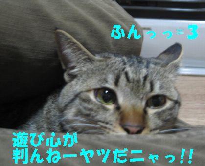 20070109232508.jpg