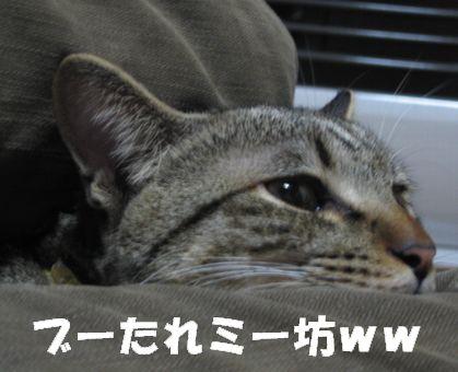 20070109232519.jpg