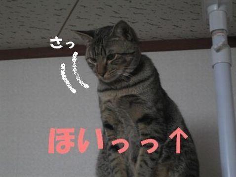 20070117225832.jpg