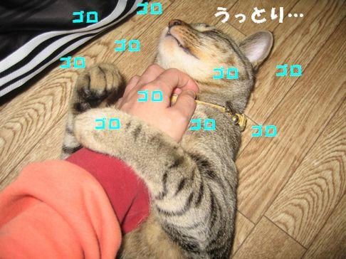 20070119233756.jpg