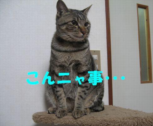 20070124213248.jpg