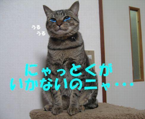 20070124213938.jpg