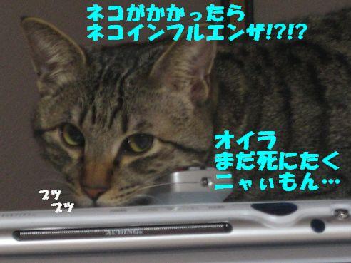 20070303031746.jpg