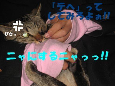 20070305231117.jpg