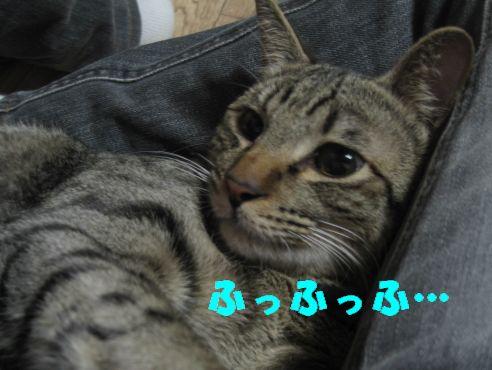 20070309003202.jpg