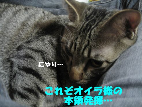 20070309003212.jpg