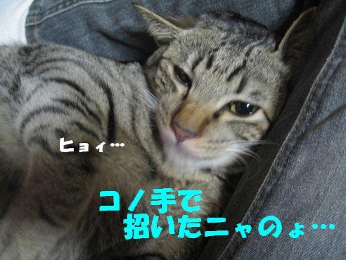 20070309003232.jpg