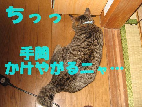 20070314180649.jpg