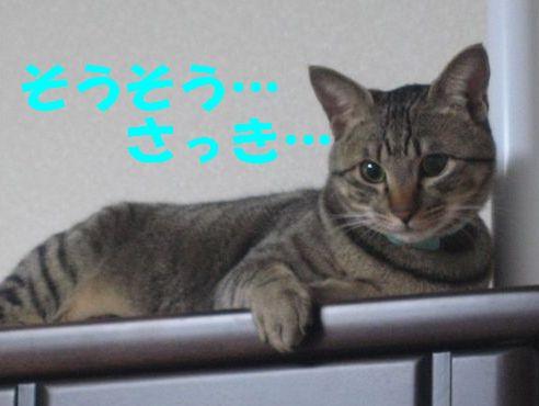 20070320010703.jpg
