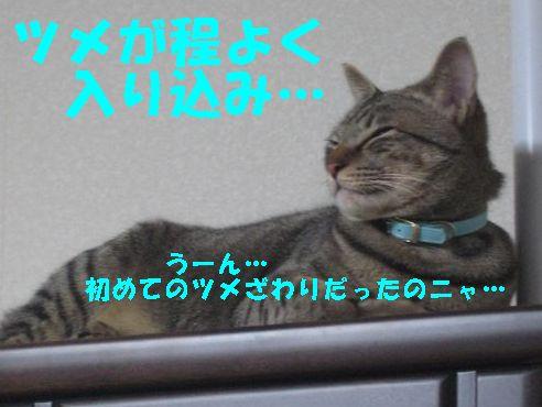 20070320010734.jpg