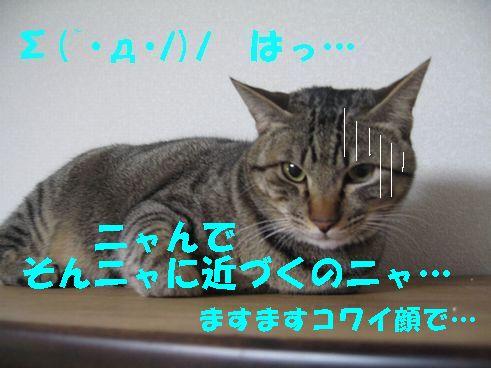 20070320010747.jpg