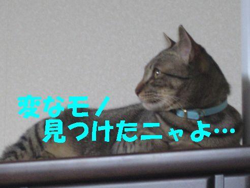 20070320011022.jpg