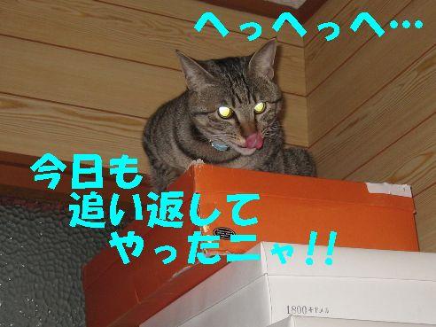 20070325222811.jpg