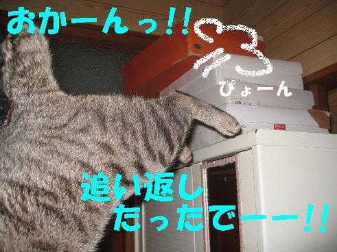 20070325232702.jpg