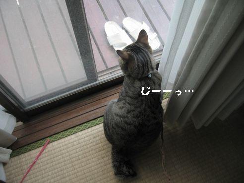 20070328191516.jpg