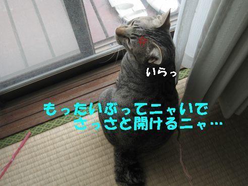 20070328191531.jpg