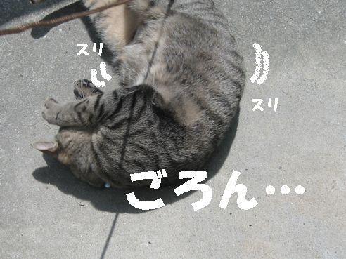 20070328192446.jpg