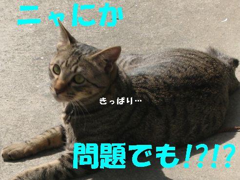 20070328193159.jpg