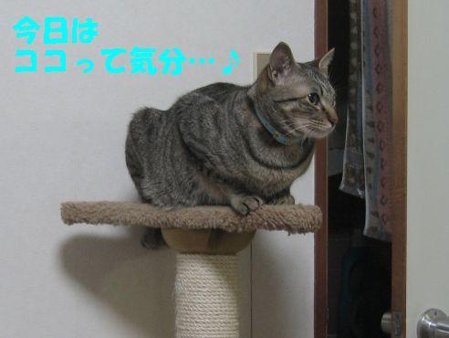 そこっすか・・・!?!?