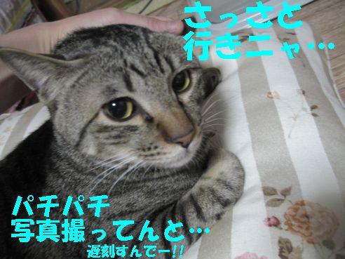 20070404000256.jpg