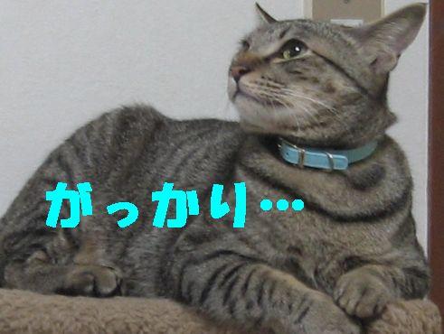20070413194002.jpg