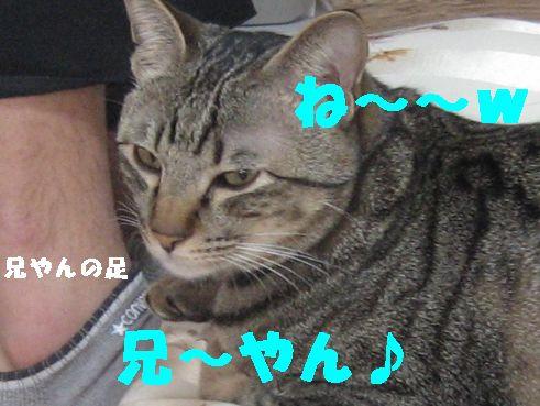 20070419233426.jpg