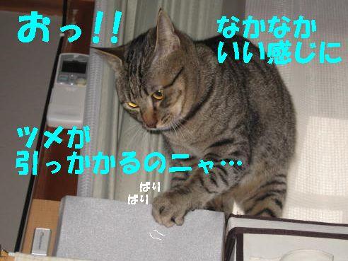 20070423110040.jpg
