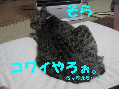 20070423234637.jpg