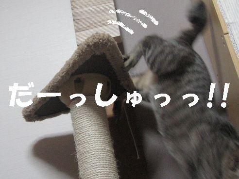 20070429203603.jpg