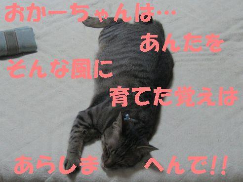 20070430012003.jpg