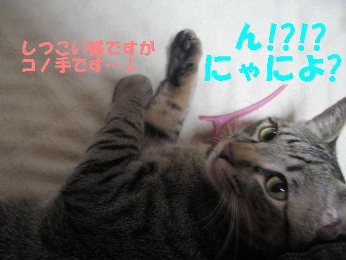 20070430012040.jpg