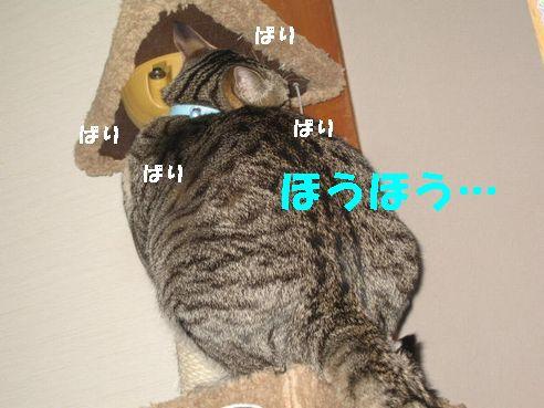 20070501005246.jpg