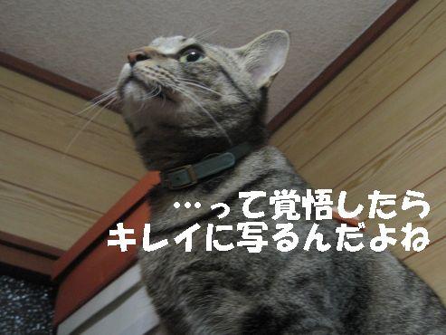 20070501235006.jpg