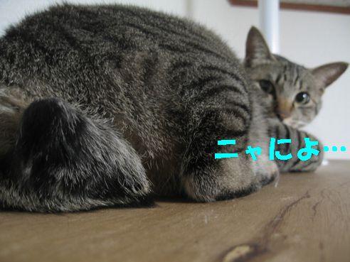 20070510130735.jpg