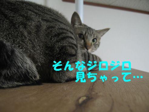 20070510130826.jpg
