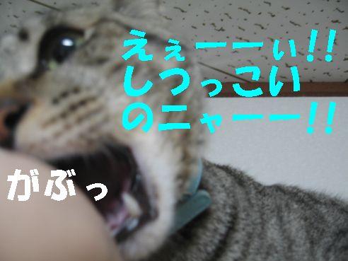 20070510132228.jpg
