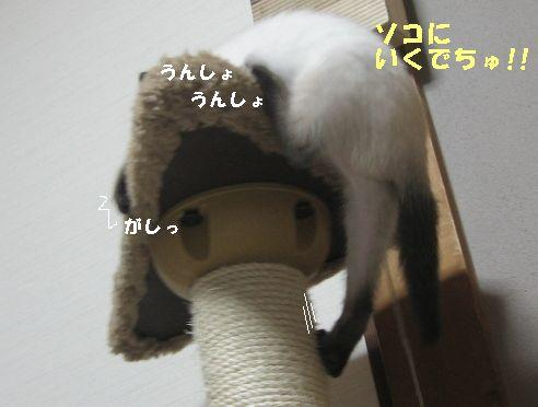 20070618025156.jpg