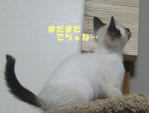 20070618025211.jpg