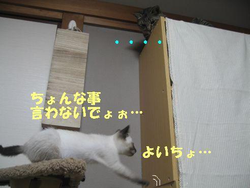 20070618025240.jpg