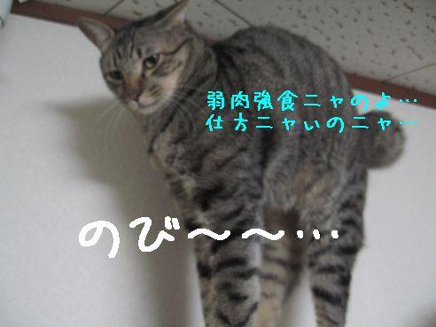 20070819223519.jpg