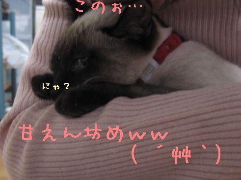 IMG_0703にゃん