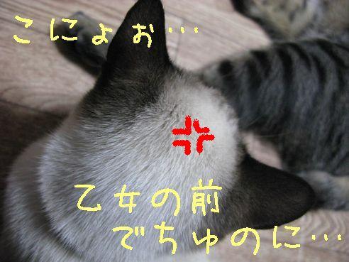 IMG_0132にゃん