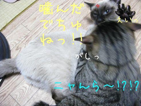 IMG_0138にゃん