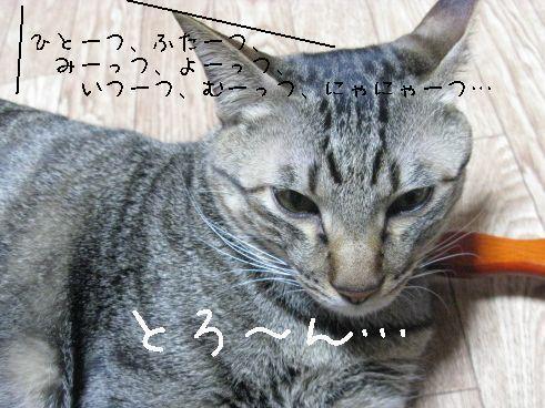 IMG_0177にゃん