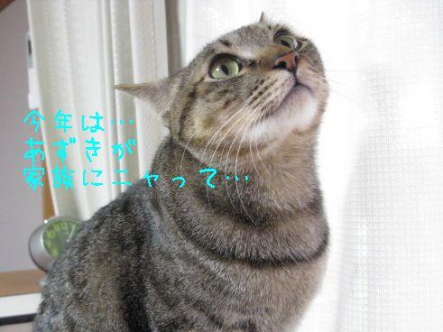 IMG_0399にゃん