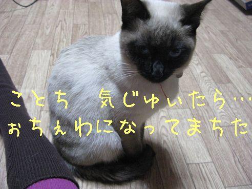 IMG_0405にゃん