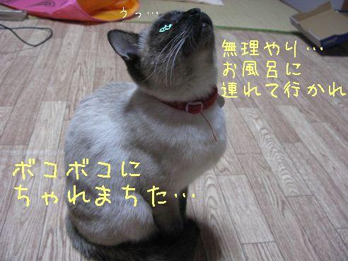 IMG_0407にゃん